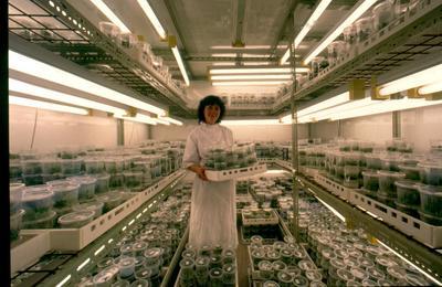 Tasman Forestry Ltd: Te Teko nursery - 1988 Tissue culture laboratory