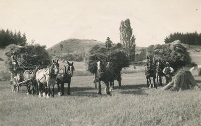"Wright, Stephenson & Co Ltd: 1890 Carting oats at ""Avondale"" - property of C G Teschmaker, Avondale, Marlborough District"