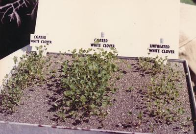 Wright, Stephenson & Co Ltd: 1962 Display of White Clover Seedlings