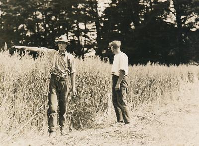 Wright, Stephenson & Co Ltd: 1945 Farm Economy - 2x unidentified men measuring plants in field (wheat?)