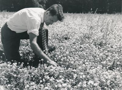 Wright, Stephenson & Co Ltd: 1950 Plants - unidentified man inspecting white clover