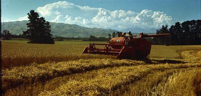 Wright, Stephenson & Co Ltd: 1960 Man driving combine harvester [negative only]