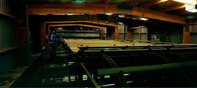 Tasman Lumber Co, Kawerau: Feb1990 interior of  new high-tech saw-mill