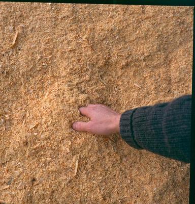 Tasman Pulp & Paper Co Ltd, Kawerau: 1994 handfull of sawdust/woodchips against a background of the same
