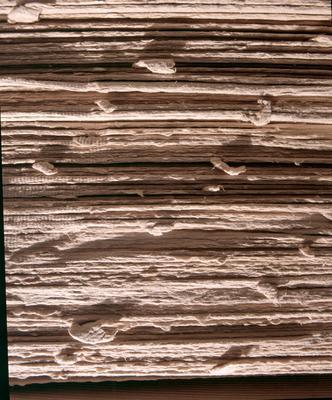 Tasman Pulp & Paper Co Ltd, Kawerau: 1996 Close up view side on of raw fibre cement pulp sheets
