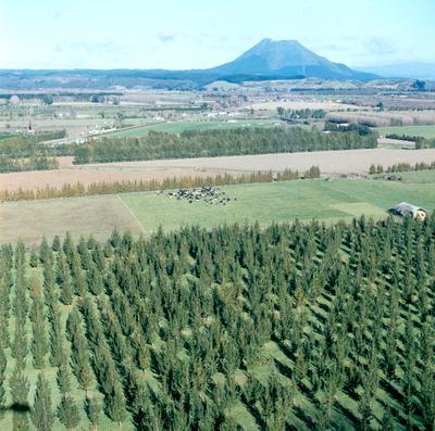 Tasman Forestry Ltd: Te Teko nursery - 1995 Aerial shots showing rows of planted radiata pine in various stages of growth