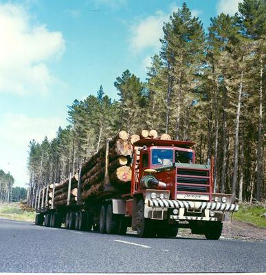 Tasman Forestry Ltd: 1981 Truck (loaded) driving along a forest road