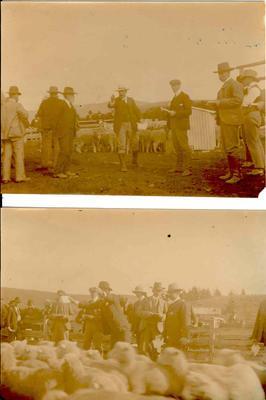 Wright Stephenson & Co Ltd - Invercargill Branch, Southland: 1909 Moa Flat Sale - C Howells auctioneer