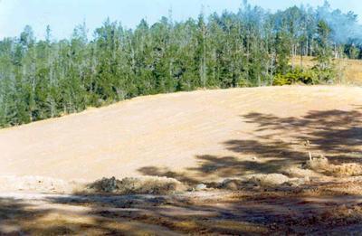 Tairua Heights subdivision, Coromanel Peninsula: 1977 development stage II - cleared land; 1977; Photograph