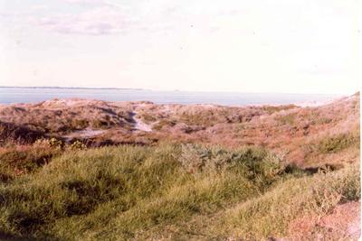 Papamoa Beach, Tauranga, Bay of Plenty: 1979 dunes; 1979; Photograph
