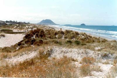 Papamoa Beach, Tauranga, Bay of Plenty: 1980 dunes; 1980; Photograph